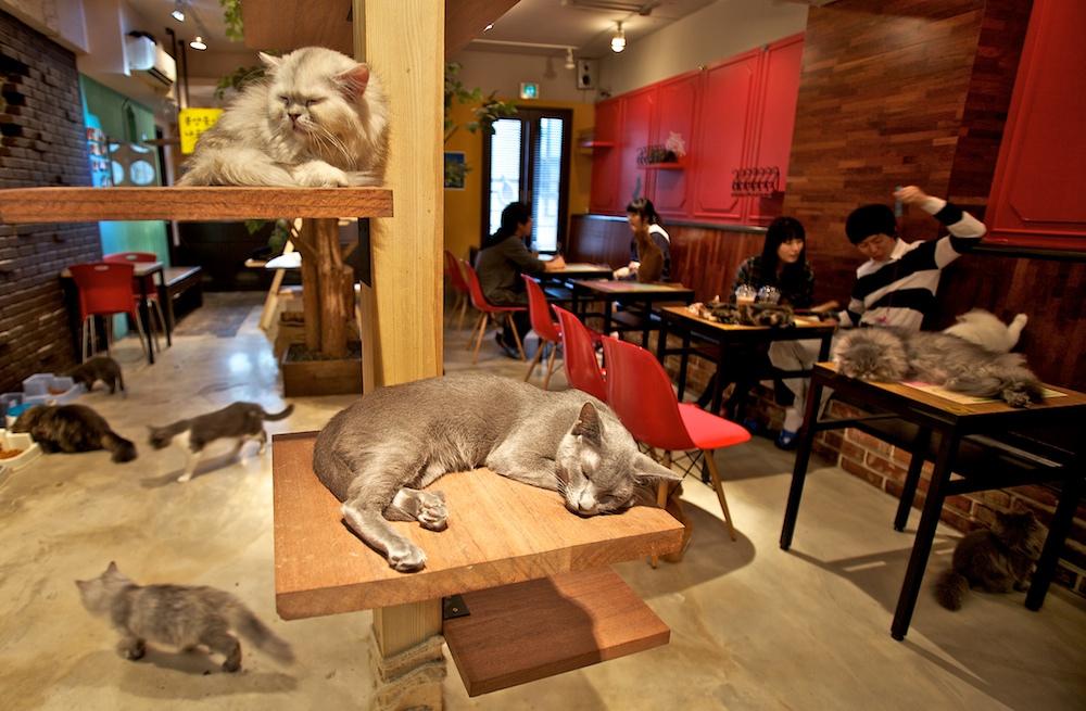 Cafe Le Chats - foto: http://meinkat.com/