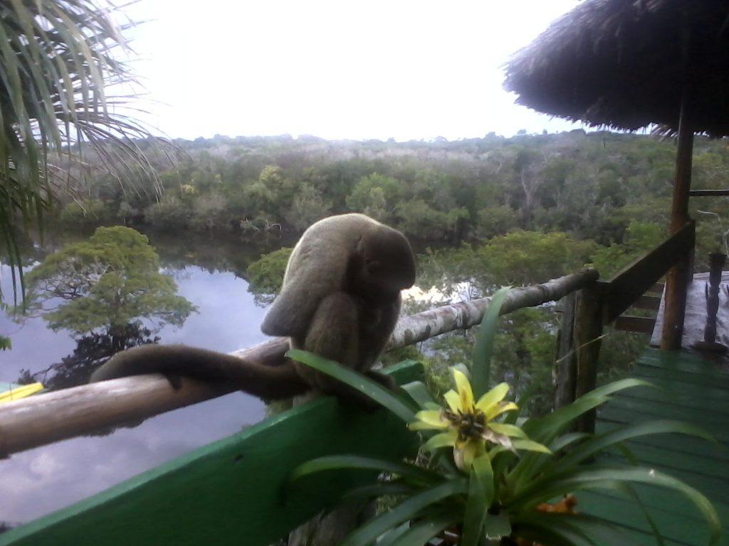 www.manaus.nexcolocal.com.br