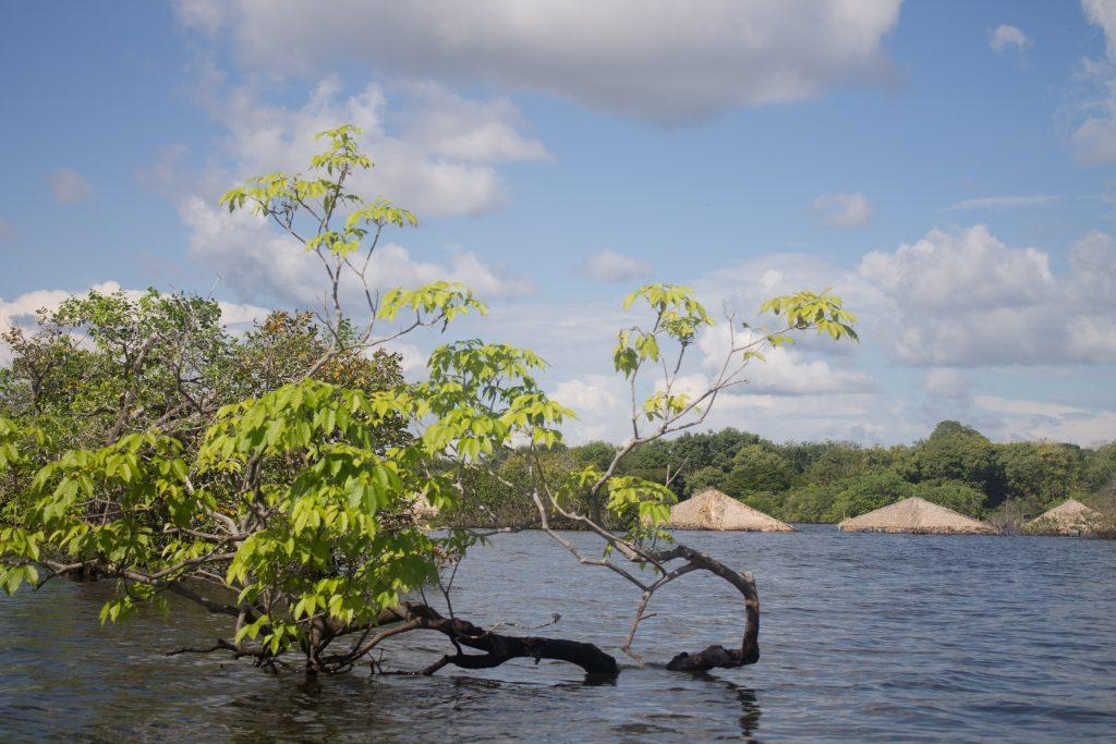 A ilha do Amor, submersa. Na alta, é point da região. Na cheia, Alter em de ser explorada de outras maneiras -- não menos mágicas. É mais tranquilo e mais barato. Crédito: Renata Helena Rodrigues.