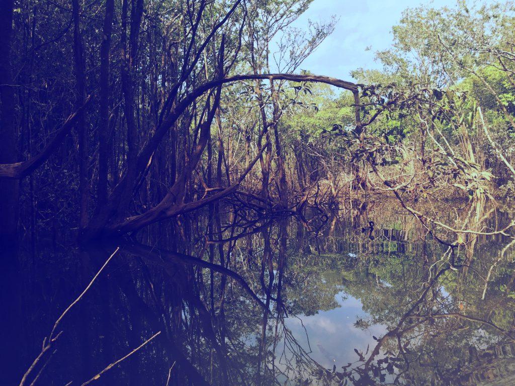 Navegar pelos igarapés é também uma experiência única e os reflexos da floresta na água é de chorar de tão lindo