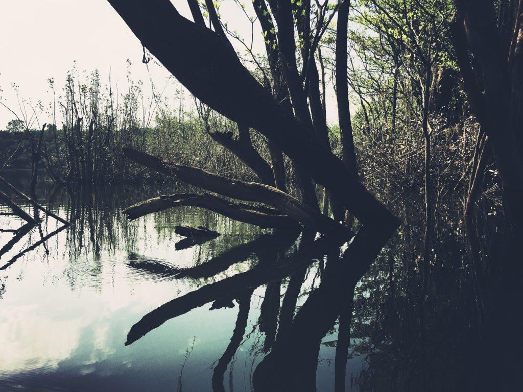 Mais reflexos da floresta submersa no meio de um igarapé, em Xixuau