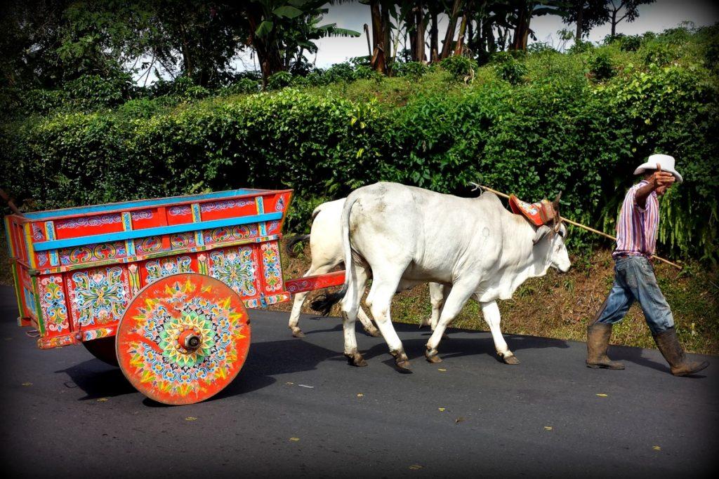 O último carro de boi de Alajuela é comandado pelo Senhor Francisco, que fica na estrada esperando para tirar foto com os turistas.