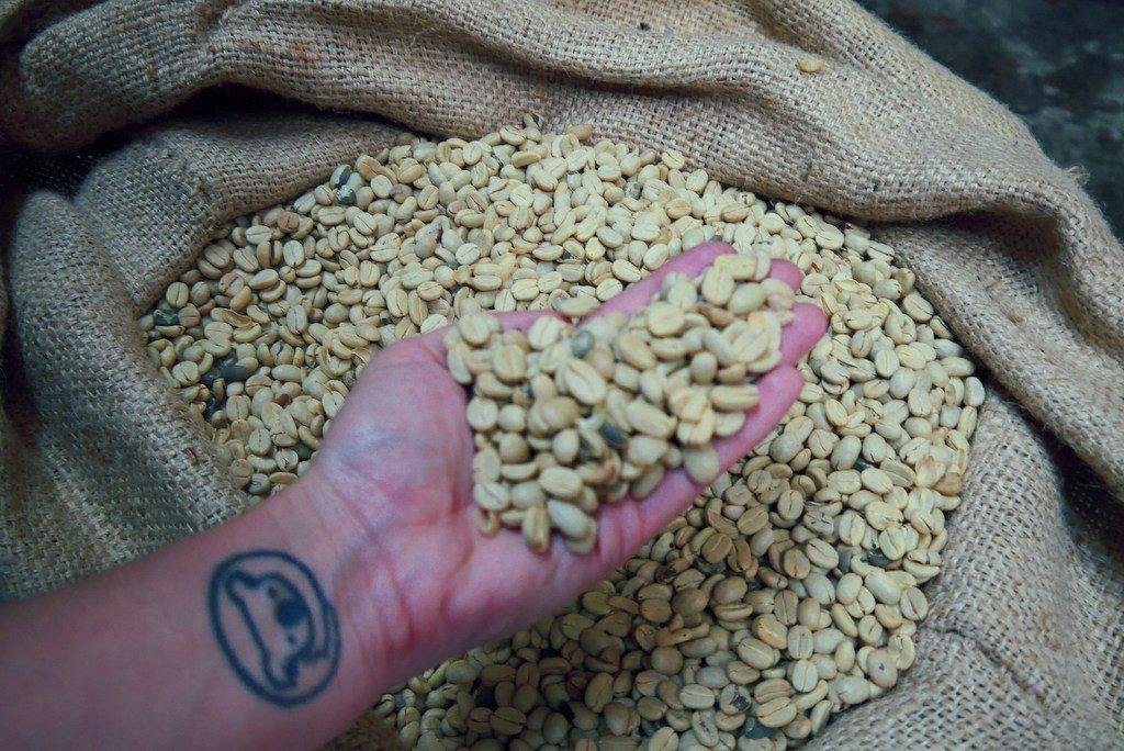 O grão de café depois de descascar, lavar, separar e secar fica assim, bem clarinho.