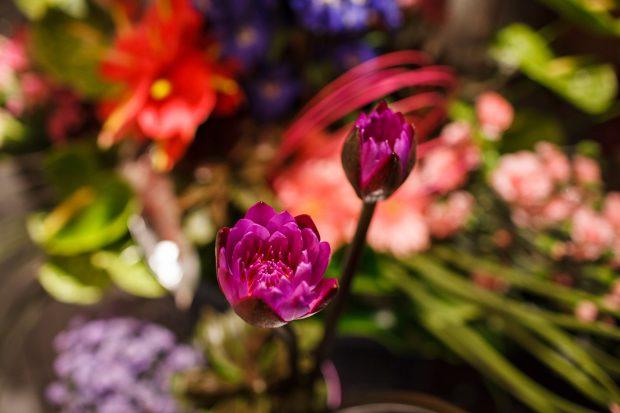 Mostra de Arranjos Florais-0004