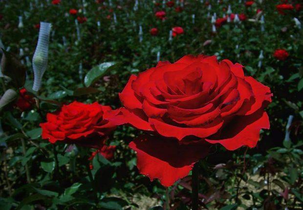 Foto Fazenda Rosas Divulgação Theo Turismo