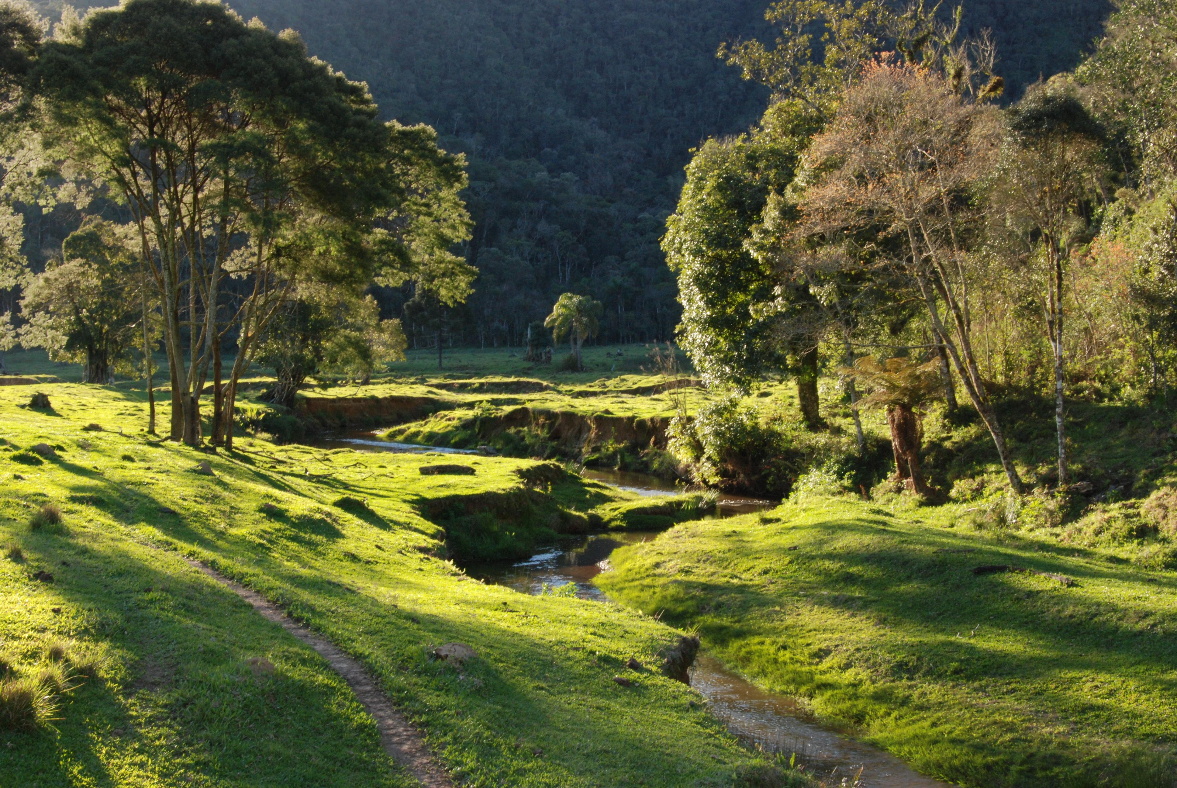 Parque Nacional da Serra do Itajaí. Foto: Cristian Janke