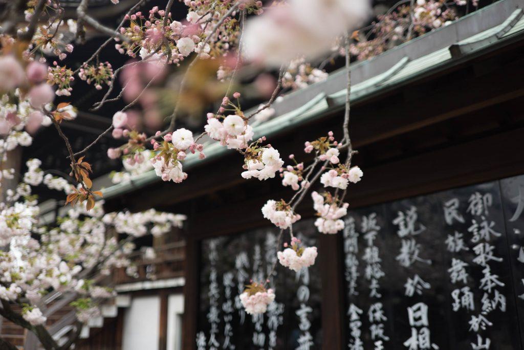 Primavera no Japão. Foto: Galen Crout