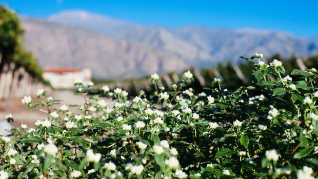 Flores no Hotel Grace Cafayate