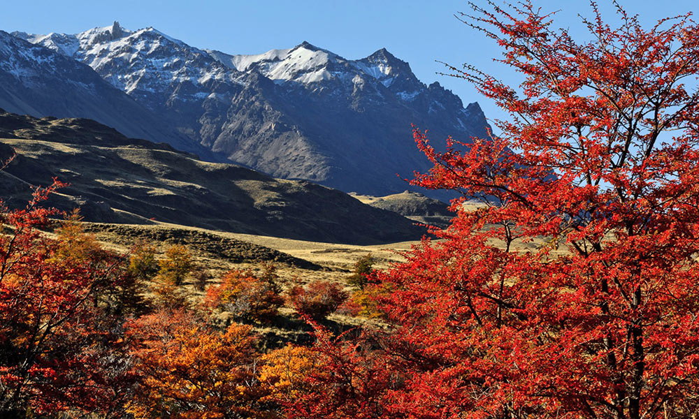 Parque Patagonia. Foto: Tompkins Conservation