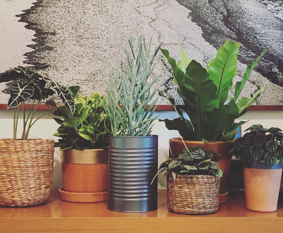 A Botânica e Tal é uma das marcas que participam