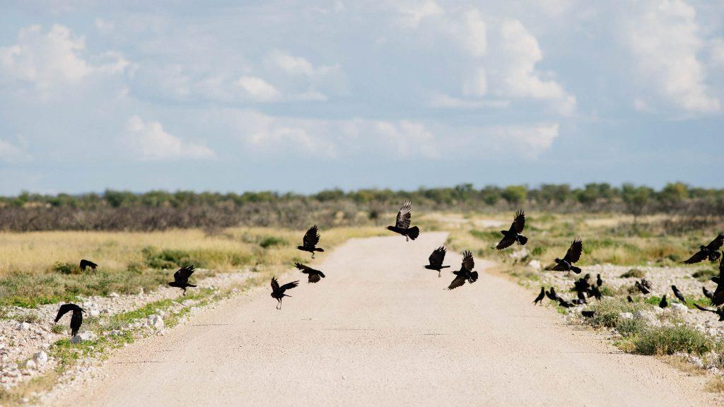 Etosha Park Namibia