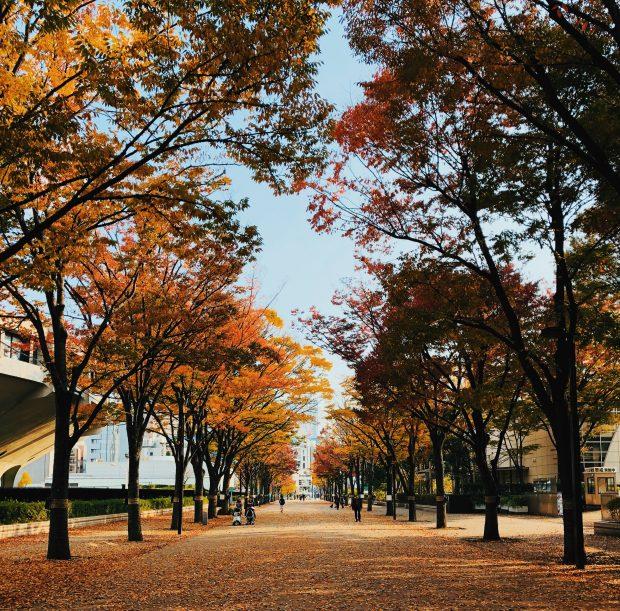 A entrada do Yoyogi Park no outono.