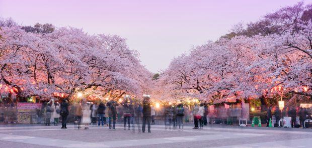 A época da sakura no Ueno Park, em Tóquio.