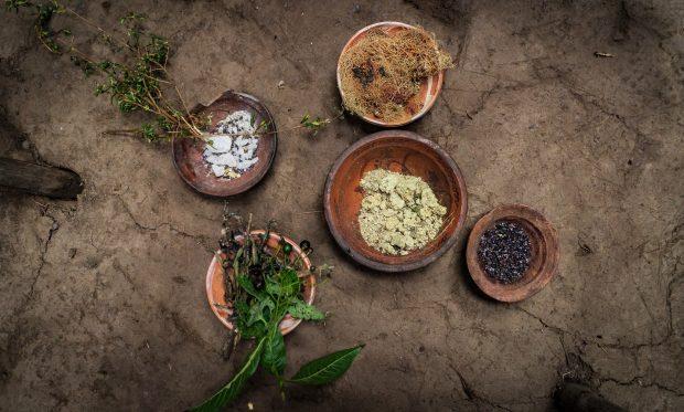 Plantas e raízes para tingimento da alpaca, Coquecancha.