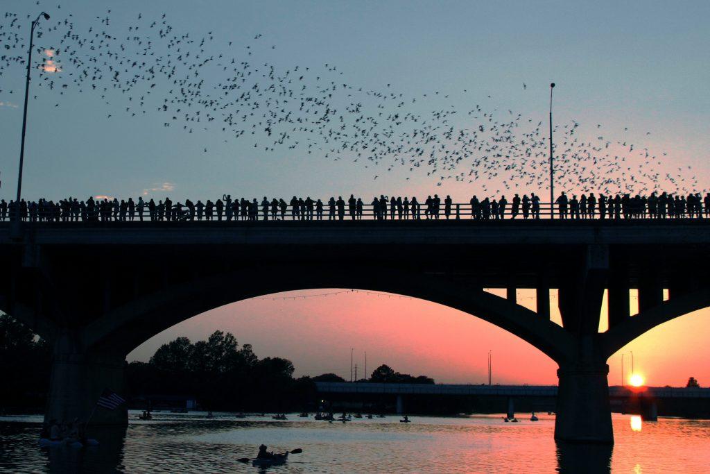 A revoada de morcegos na Congress Bridge. Foto: shutterstock